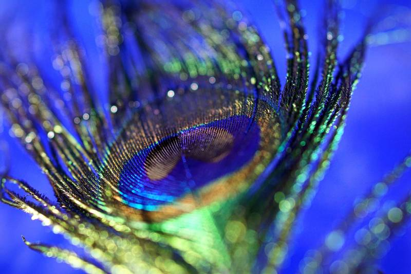 peacock-feather-3030181_1920-me.jpg