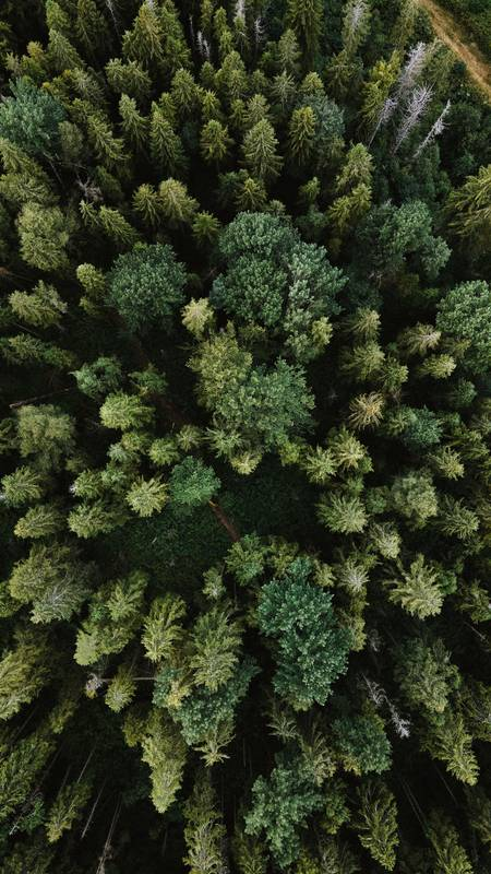 forest, drone shot